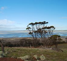 Lake Dumbleyung by Adrian Kent