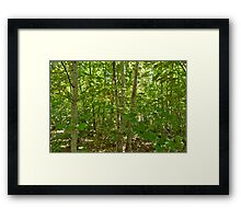 Looking Through Trees. Mt Franklin Framed Print