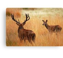 Here's looking at you!!!! Canvas Print