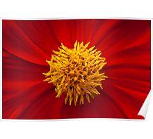 Red Flower Yellow Stamen Poster