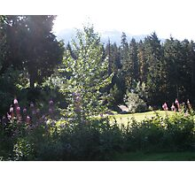 Whistler in Purple Photographic Print