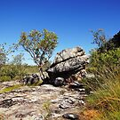 The magic of Arnhem Land - a tree and a rock by georgieboy98