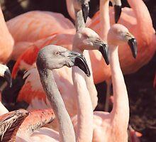 Three Flamingos by MelissaSue