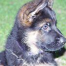 Rahje 8 weeks old  by janfoster