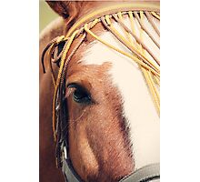 Brown Eyes Photographic Print