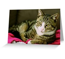Cutie Cat is growing Greeting Card