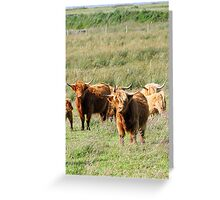 Highland Cow (Heeland Coo), Scotland Greeting Card