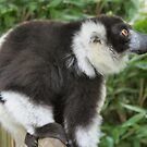 Black and white Lemur by Dawnsky2
