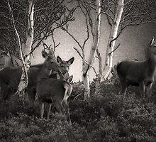 Dunwich Heath Deer by Darren Burroughs