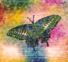 Butterfly Art by Nhan Ngo