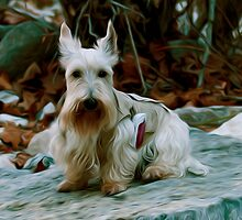 Scottie on a Hike by Paul Wolf