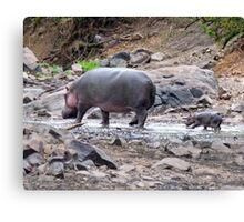 New born hippo Canvas Print