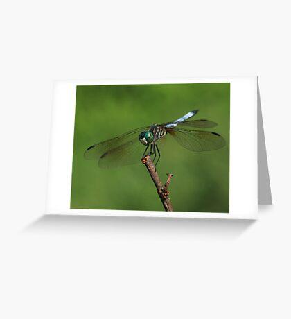 Dragonfly Summer ~ Greeting Card