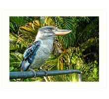 Northern Australian Kookaburra Art Print