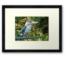 Northern Australian Kookaburra Framed Print