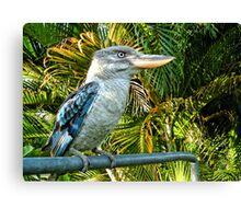 Northern Australian Kookaburra Canvas Print