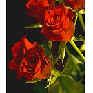 Red Rose iPhone Cover by GerryMac