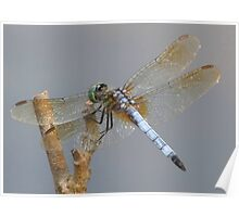 Little Green Dragonfly Poster