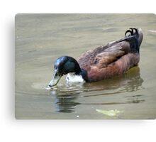 Darth Duck Canvas Print