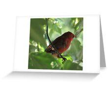 Tennessee Cardinal Greeting Card