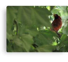 Cardinal in Maple Tree Canvas Print