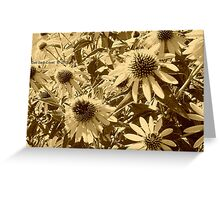 Cone Flowers in Sepia Greeting Card