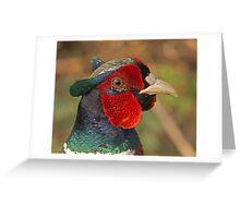 Male Pheasant Greeting Card