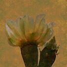 Cactus Flower in Grunge by Rosalie Scanlon