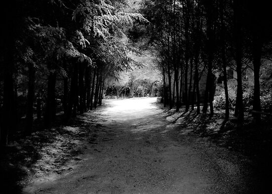 Our Path is Always Darkest Before the Light by ©Marcelle Raphael / Southern Belle Studios