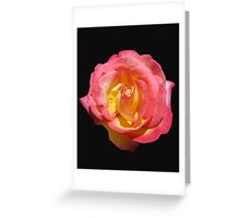 Sunlit 'Sugar Pink' Rose on Black Background Greeting Card