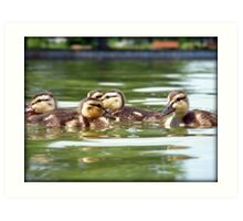 Ducklings Point Of View Art Print