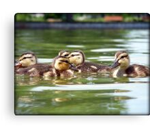 Ducklings Point Of View Canvas Print