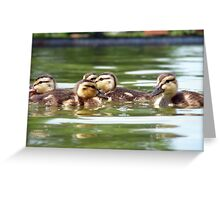 Ducklings Point Of View Greeting Card