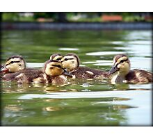 Ducklings Point Of View Photographic Print