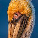 Pelican Profile by Daniel  Parent