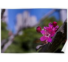 Cherry Blossom with City Skyline In the Background Poster