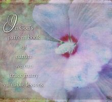 God's pattern book-inspirational by vigor