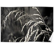 Grass in mono Poster