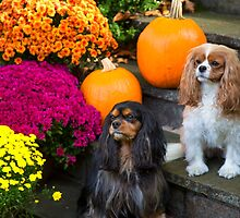 Cavalier King Charles Spaniel Autumn Buddies by daphsam