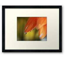Three Friends Hangin' Out Framed Print