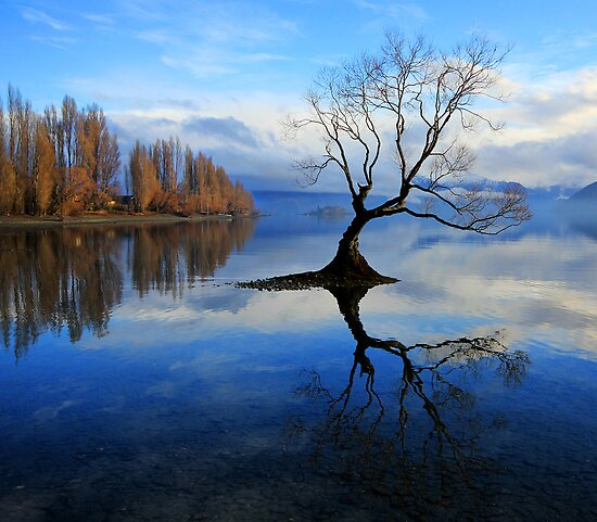 Wanaka Lake Tree by Charles Kosina