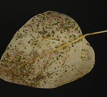 Leaf by Annie Lemay  Photography
