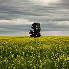 Australia Wide by David Haworth