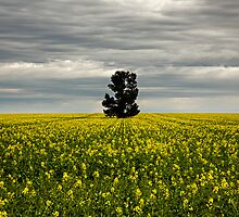 Master of the Canola by David Haworth