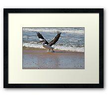 pelican     #6964 Framed Print