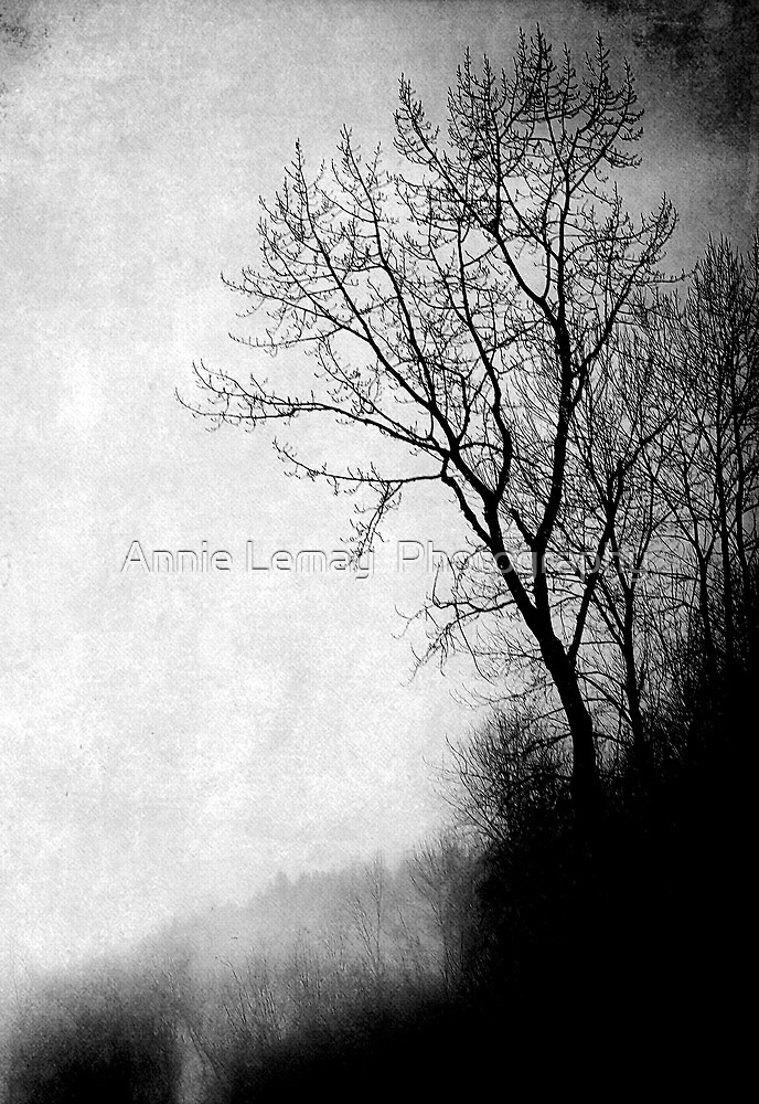 Mystic Daze by Annie Lemay  Photography