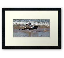 pelican - step.......and up and away Framed Print