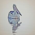 Evening Light and Pelican by waxyfrog