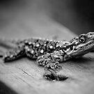 Lizard by rhiannon85