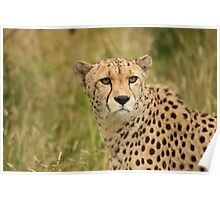 wildlife photo Poster